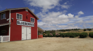 The Dreamy Blueberry Farm In Southern California That Will Make Your Weekend Complete