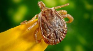 You Won't Be Happy To Hear That Alaska Is Experiencing A Major Surge Of Ticks This Year
