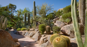 This Enchanting Arizona Garden Has Over 250 Types Of Cactus