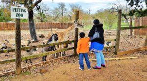 This Zoo Near Austin Has Animals That You May Have Never Seen In Person Before