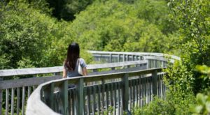 Discover A Boardwalk, Covered Bridge, And Water Wheel At This One Connecticut State Park