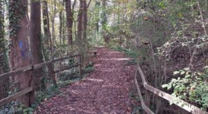 There's An Enchanted Forest Hiding In The Middle Of This Virginia Town And You Just Have To Go