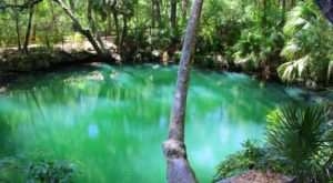The Tranquil Park In Florida With Emerald Green Springs Like You Wouldn't Believe