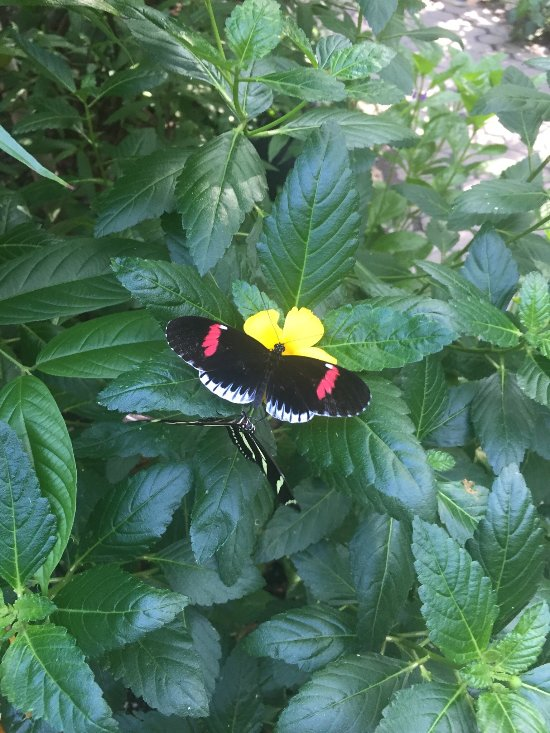 San Antonio Zoo S Butterfly Forest Is A Great Family