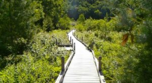 This Vermont Park Has An Enchanting Boardwalk That You'll Want To Explore
