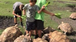 The One Of A Kind Tortoise Park In Texas That Your Kids Will Absolutely Love