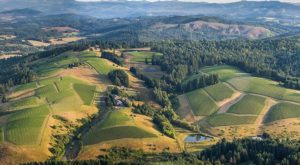 The One County In Oregon With Over 80 Award-Winning Wineries